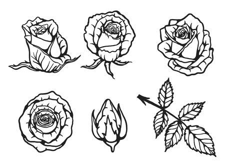 Rose vector set by hand drawing.Beautiful flower on brown background.Rose art highly detailed in line art style. Illustration