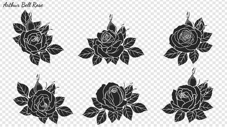 Rose ornament vector by hand drawing. Beautiful flower on transparent background. Arthur Bell rose vector art highly detailed in line art style. Flower tattoo for paint or pattern. 版權商用圖片 - 127515337