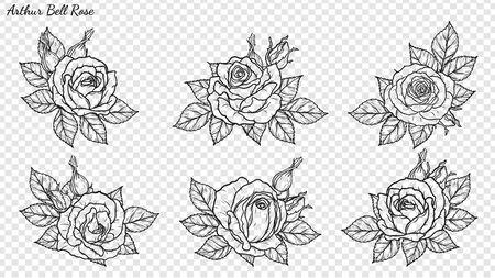 Vettore dell'ornamento della rosa a mano disegno. Bel fiore su sfondo trasparente. Arthur Bell rosa arte vettoriale altamente dettagliata in stile art line. Tatuaggio floreale per pittura o motivo.