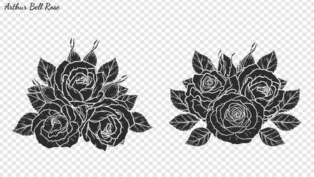 Rose ornament vector by hand drawing. Beautiful flower on transparent background. Arthur Bell rose vector art highly detailed in line art style. Flower tattoo for paint or pattern.