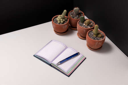 Desktop still life with plants. Corner of a desk with potted cacti, a small notebook and a pen.
