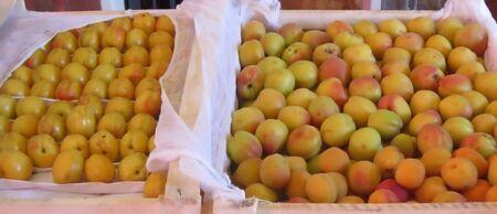 tare: peaches