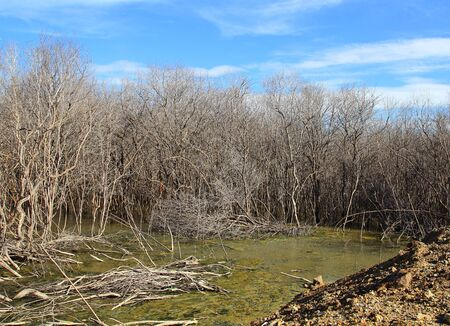 degradation: The mangrove tree at low tide and degradation Stock Photo