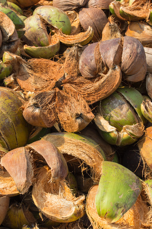 husk: Pile of discarded coconut husk in Thailand coconut farm