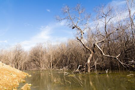 degradation: The mangrove forest degradation Stock Photo