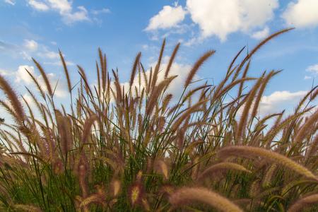 tender tenderness: Grasses on the roadside background Stock Photo