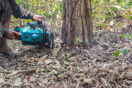 logger: Lumberjack logger worker cutting firewood timber tree in forest with chainsaw Stock Photo