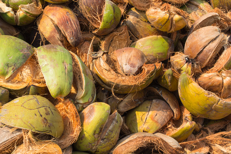 discard: Pile of discarded coconut husk in Thailand coconut farm