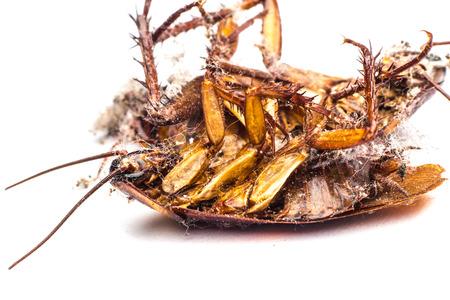 Dead cockroaches on the floor contaminated debris.