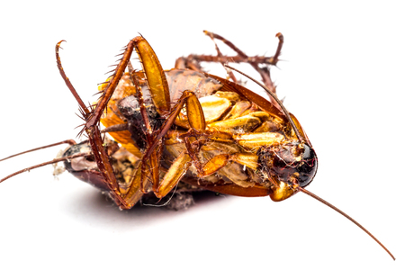 debris: Dead cockroaches on the floor contaminated debris.