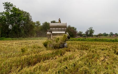 combine: combine Harvester in rice field