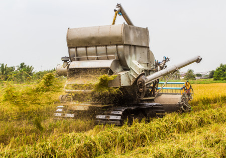 harvester: combine Harvester in rice field
