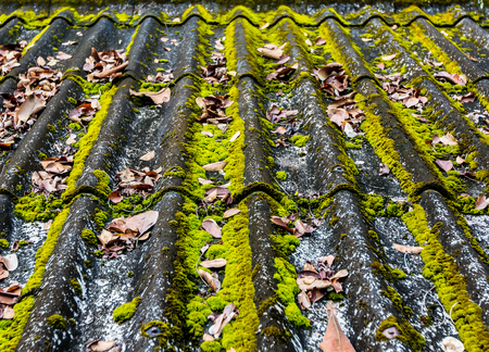natural vegetation: A roof  tiles old and worn, with natural vegetation, which needs restructuring.