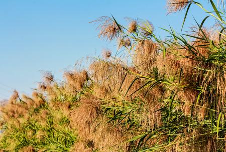 wayside: Wayside grass with blue sky.