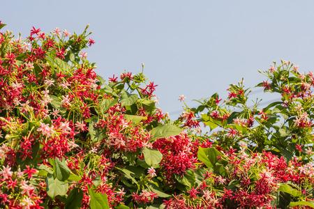 afield: beautiful sky and wildflowers