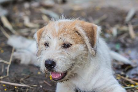 potrait: A potrait of a curious dog Stock Photo