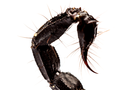 subdue: Close Up view of  Tail scorpion venom
