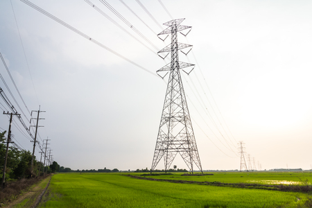 high voltage pole are located in rice fields.