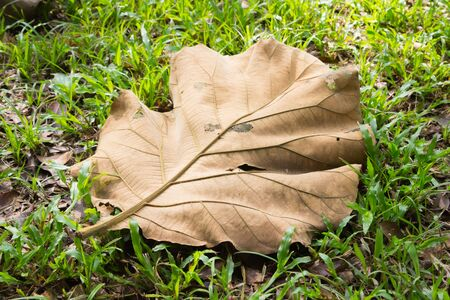Dry autumn leaves, natural background.