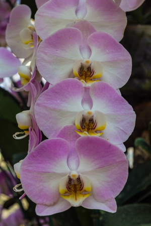 Beautiful orchids in greenhouse Stock Photo
