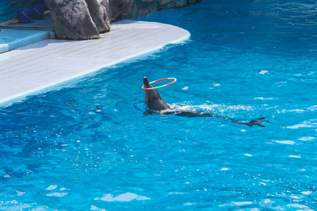 Dolphins show in the zoo