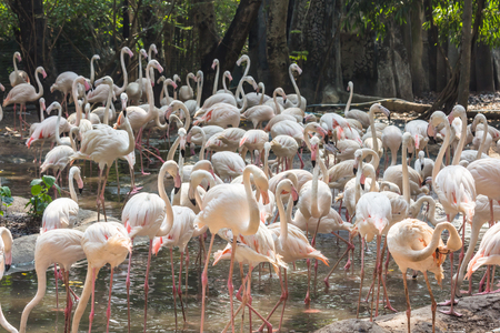 The bird flamingo  in the zoo Thailand.