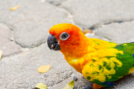 The bird parrot beautiful in the zoo