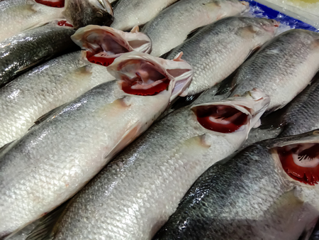 Fresh White Snappers fish in the market Stock Photo