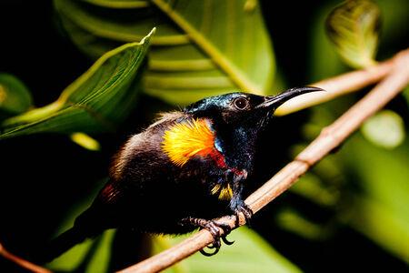 sunbird: Sunbird