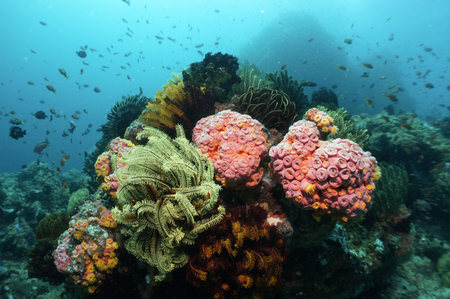 soft corals: Colourful soft corals in cebu