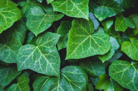 Green floral pattern of leaves.