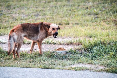 Hungry stray aggressive dog in clearing. Nearby is pile of dog food. Help stray animals. Stock Photo