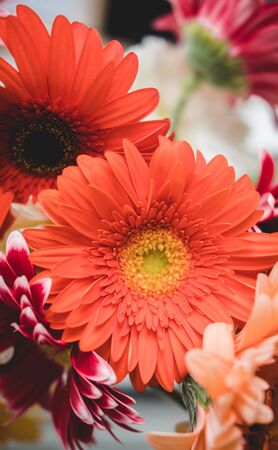 Bright beautiful red and yellow flowers gerbera. Floral still life.