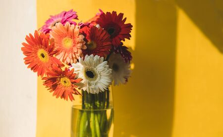 Bright beautiful red and yellow flowers bouquet of gerberas stand in glass vase on yellow background. Floral still life with shadow overlay.