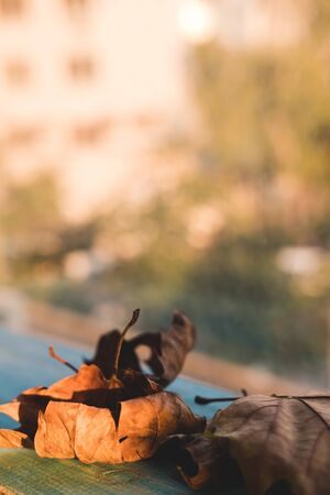 Dry autumn leaves lie on a wooden background by the window. Autumn approach concept. Stock Photo