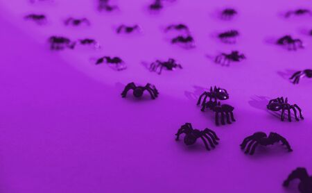 Halloween festive greeting card with spiders and shadow on a bright violet background. Postcard and scenery for All Saints Day. Top view. Flatlay. Copy space.