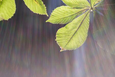The sun breaks through green leaves of tree