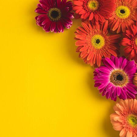 Bright beautiful gerbera flowers on sunny yellow Banco de Imagens