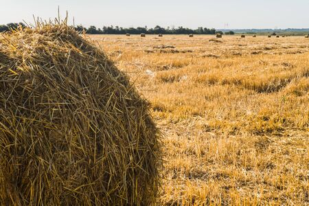 Haystack on the field after harvest.