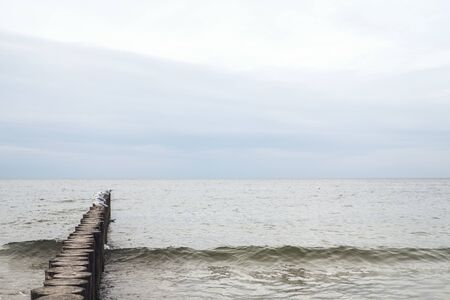Breakwater on seashore from wooden logs. Seagulls are sitting on it in the middle of sea. Cloudy rainy weather