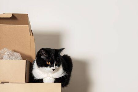 Sad black and white Tuxedo cat sits on a shelf next to a cardboard box. Copyspace.
