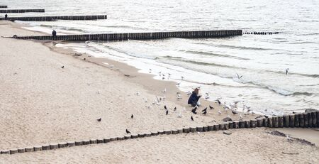 Unrecognizable girl on the seashore with wooden breakwaters feeds gulls and pigeons.