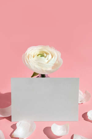 White flowers and ranunculus petals in a glass vase, with a paper card on pink Reklamní fotografie - 157232047