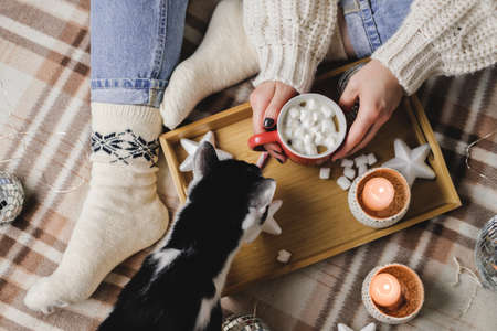 Young woman sits on plaid in cozy knitted woolen sweater with tuxedo cat and holds cup cocoa marshmallows.