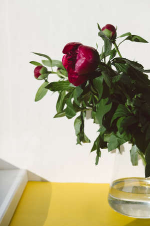Red bouquet of peonies with green leaves stands in a glass vase on a yellow background. Spring, summer, bloom, greeting card, poster. Reklamní fotografie