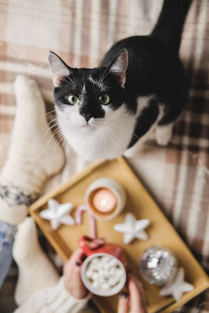 Young woman sits on plaid in cozy knitted woolen sweater with funny tuxedo black and white cat. Wooden tray with mug of chocolate, marshmallow cocoa, Candle, stars. Hygge New Year, cozy Christmas Reklamní fotografie - 159019750