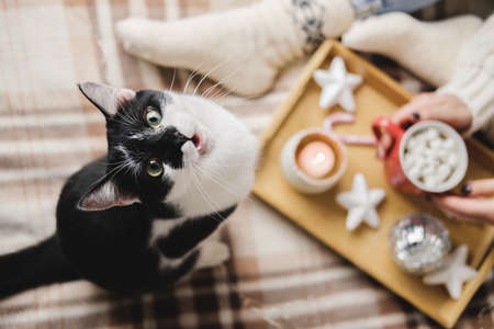 Young woman sits on plaid in cozy knitted woolen sweater with funny tuxedo black and white cat. Wooden tray with mug of chocolate, marshmallow cocoa, Candle, stars. Hygge New Year, cozy Christmas.
