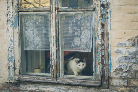 Blue wooden window of an old country house with funny cat.