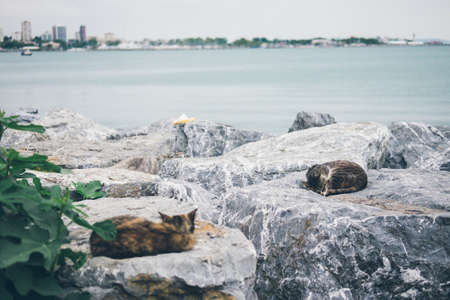 Homeless cute adult cat lies on the stones by the sea and sleeps, rests. Turkey, Istanbul. The problem of homeless animals in cities.