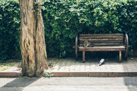 Homeless cute cat lies on a bench and sleeps and rests. Turkey, Istanbul. The problem of homeless animals in cities.